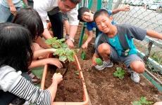 planting-food